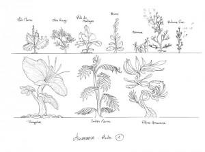 plantes_01